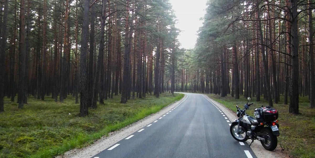 Leśna droga w kierunku Asmus
