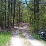 Leśny trakt za Piasznem