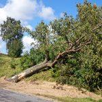 Powalone drzewo przy DW228