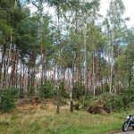 Lasy na drodze pomiędzy Parchowem a Naklą