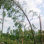 Drzewa połamane jak zapałki