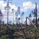 leśnictwo Dywan