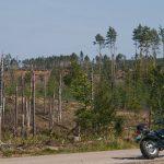 W tle widać czekające na wywóz drewno zebrane po nawałnicy